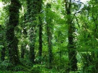 Lagodekhi Protected Area - w drodze do Małego Wodospadu