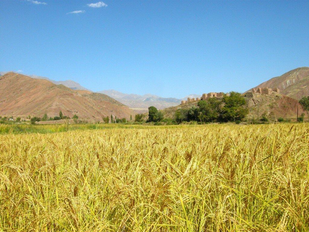 Pole uprawne w dolinie Alamut